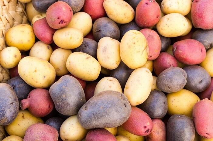 Какие бывают сорта картофеля и в чем их отличия